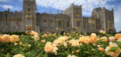 СЛЕД 40 ГОДИНИ: Една от градините в двореца Уиндзор приема посетители (ГАЛЕРИЯ)