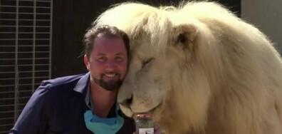 В ПРЕГРЪДКАТА НА ЛЪВА: Как се снима клип с диво животно? (ВИДЕО)
