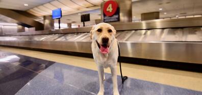 Кучета тестват пътници за коронавирус на летището в Хелзинки