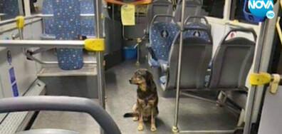 ЩАСТЛИВА РАЗВРЪЗКА: Откриха изгубено куче в автобус на градския транспорт (ВИДЕО)