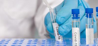 Остава нисък процентът на положителните проби за COVID-19