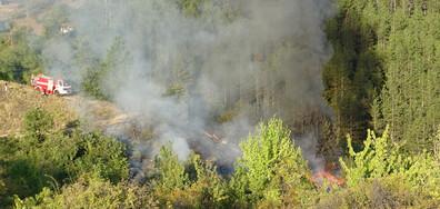 Пламна сметище край Благоевград, огънят стигна борова гора (ВИДЕО+СНИМКИ)