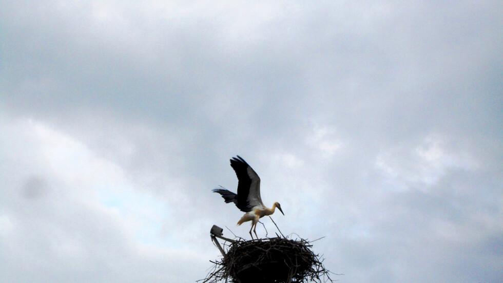 Снимка: Българско дружество за защита на птиците