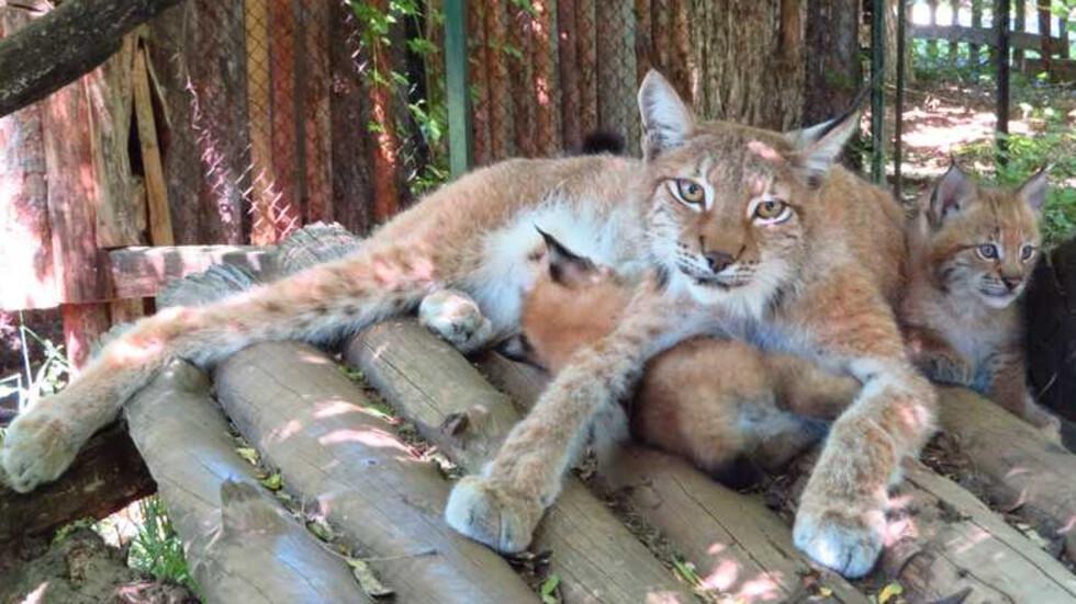 Снимка: Софийски зоопарк