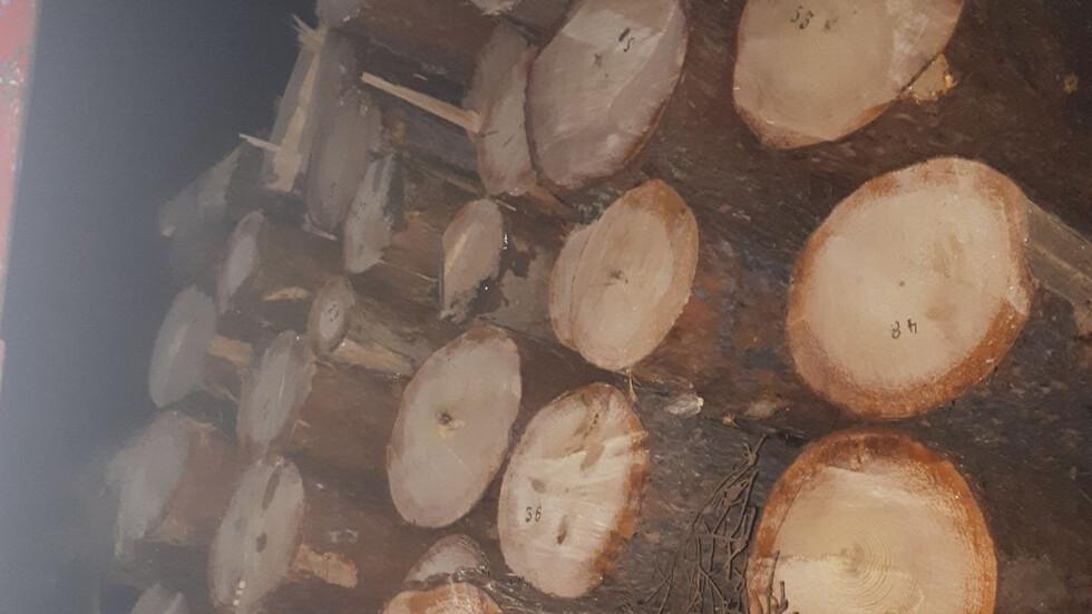 Снимка: Изпълнителна агенция по горите