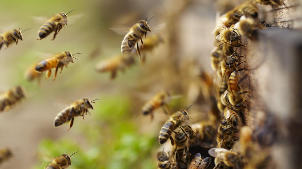 """""""В ерата на водолея"""": Интернет на пчелите - пазители на бъдеще"""