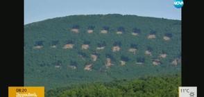 Кой и защо изсече на квадрати горите край Хасково?