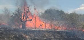 Без субсидии за фермерите, предизвикващи горски пожари