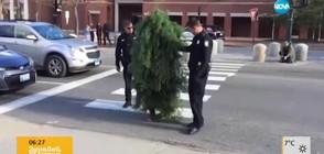 Арестуваха ходещо дърво в САЩ