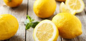 ОПАСНИ ЛИМОНИ: Връщаме на Турция плодове с пестициди