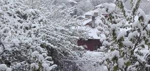 """От """"Моята новина: Тази пролет зимата ще е мека (ВИДЕО+СНИМКИ)"""