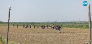 ЗА ПРИМЕР: Цяло село с безработни намери прехрана в общия труд