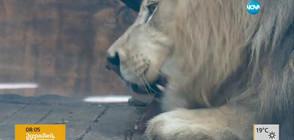 Нова атракция в зоопарка в София