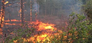 ДЕСЕТКИ ИЗГОРЕЛИ ПОСТРОЙКИ: Хората в Изворище обвиняват пожарната