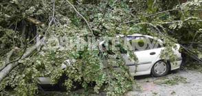 Семейство пострада от паднали дървета (СНИМКИ)