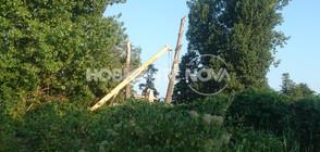 Клон падна и уби на място мъж в София (ВИДЕО+СНИМКИ)