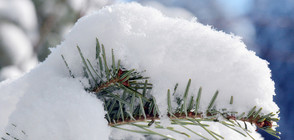 Силен снеговалеж и проблеми с трафика в половин България (ВИДЕО+СНИМКИ)