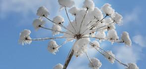 ЗИМАТА СЕ ЗАВЪРНА: Студ и сняг през новата седмица