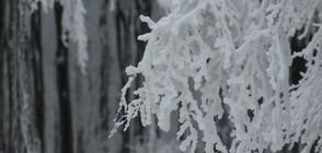 Ще има ли много снеговалежи през ноември? (ВИДЕО)