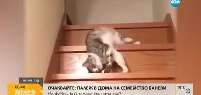 От Vbox7: Как котка слиза по стълби