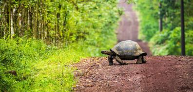 100-годишна костенурка бяга от дома си, търси любовта