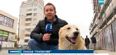 Кой е най-големият гратисчия в София? (ВИДЕО+СНИМКИ)