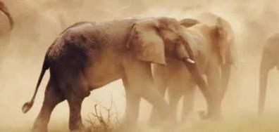 Принц Хари с призив за защита на слоновете (ВИДЕО+СНИМКИ)
