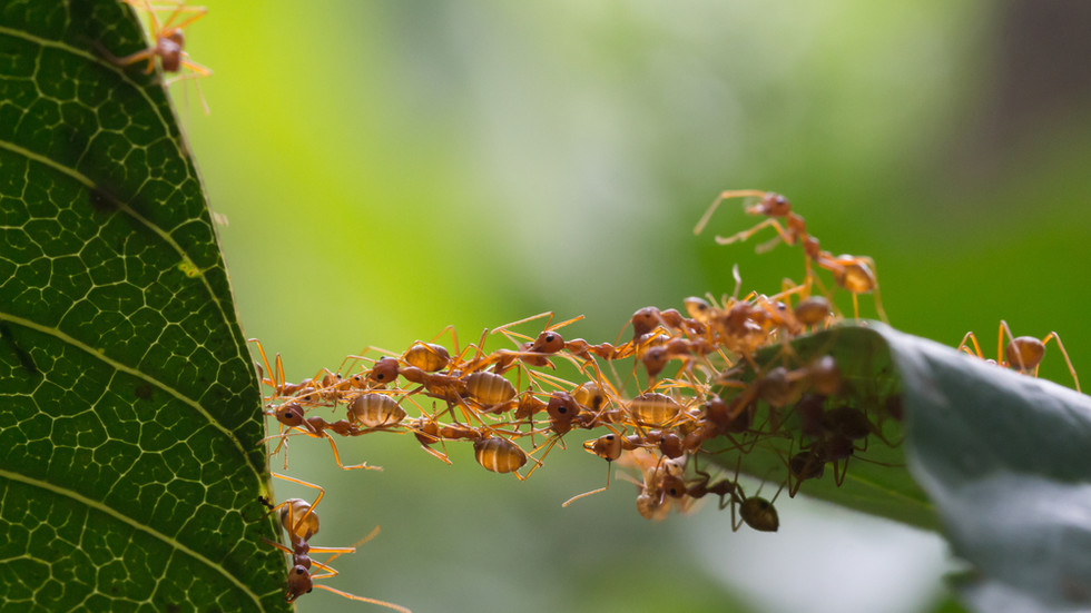 Снимка: Shutterstock