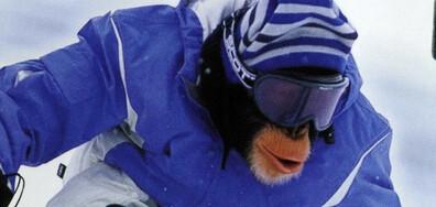 МХП: Маймунски Х-тремни постижения