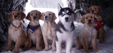 Снежни приятели