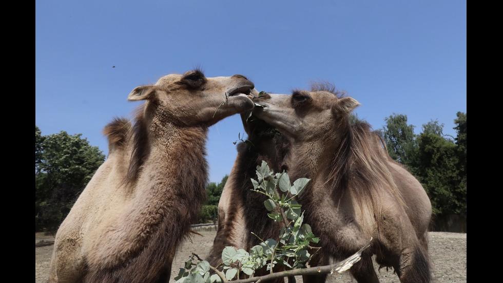 Новите обитатели на Столичния зоопарк