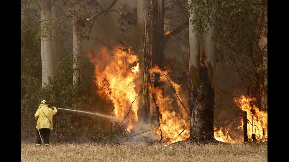 Бедствено положение заради пожарите в Австралия