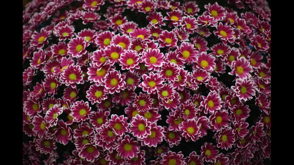 8 МАРТ: Какво цвете да подарим на любимата жена?