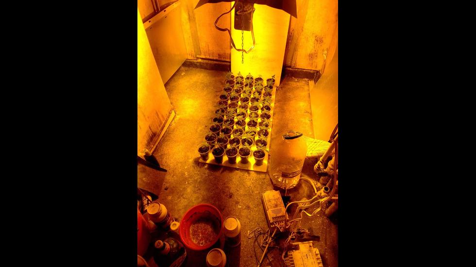 Откриха наркооранжерия в апартамент в Ботевград