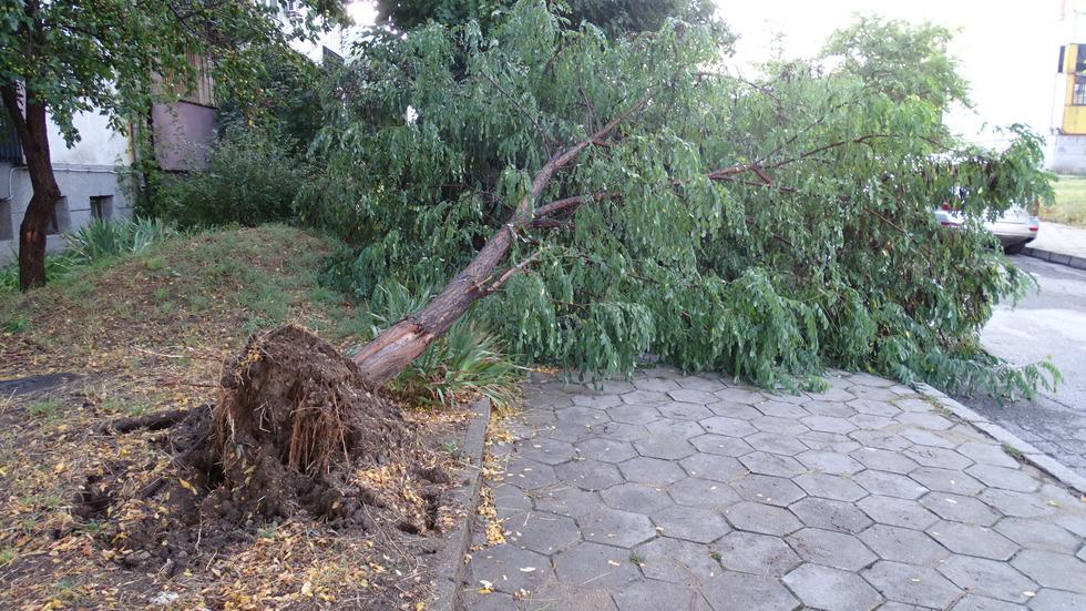 Силна буря изкорени дървета в Благоевград