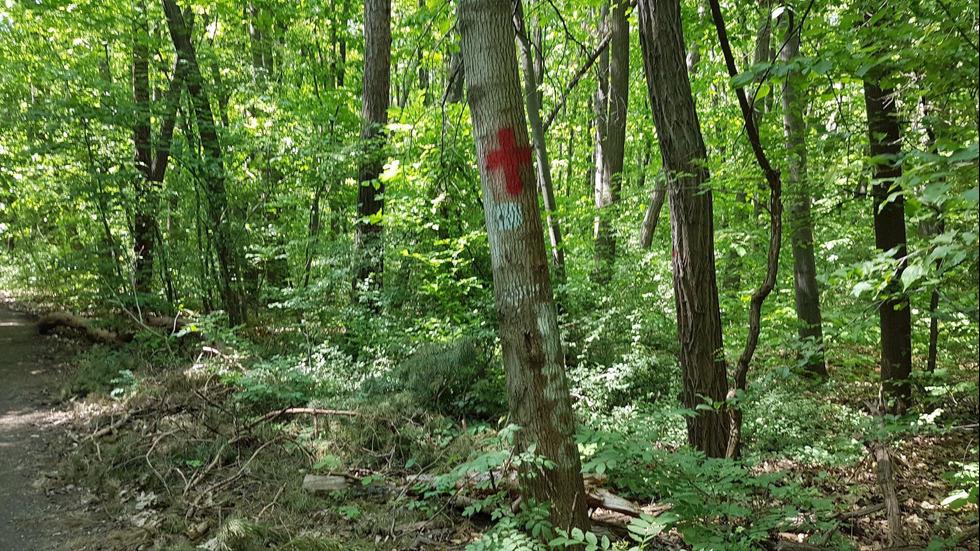 Мъж рисува кървави кръстове в Борисовата градина