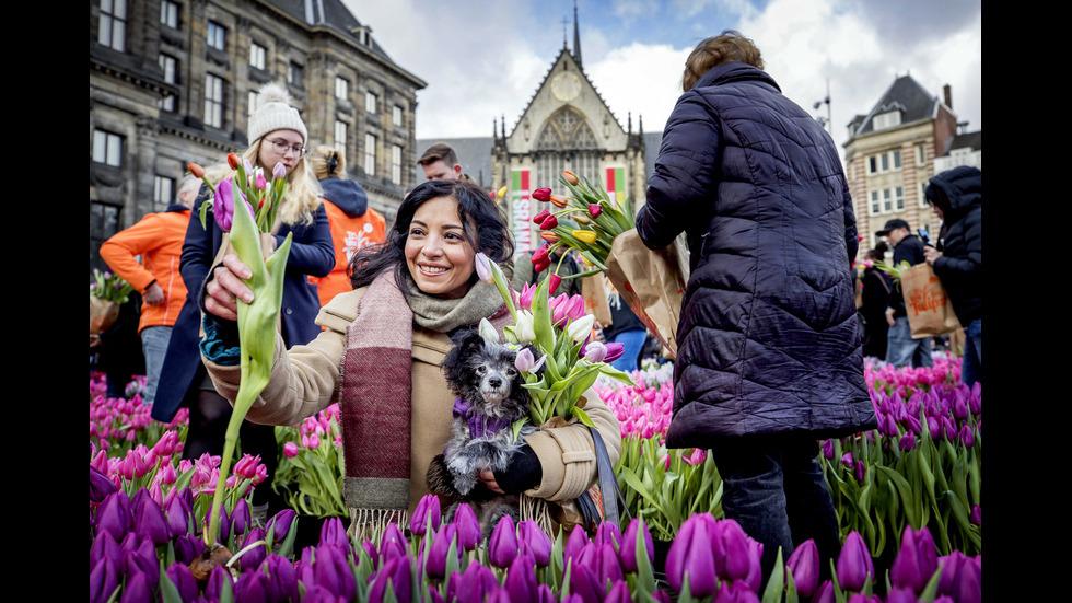 Амстердам откри сезона на лалетата с килим от цветя