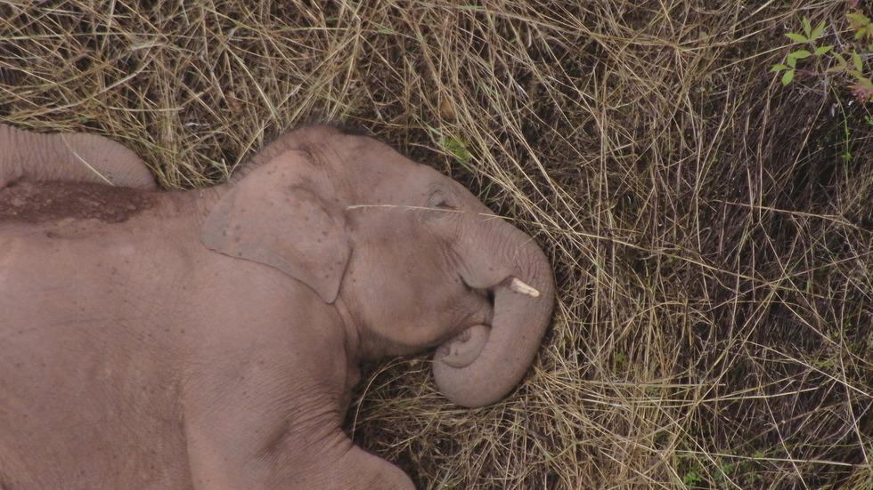 Пътешествието на стадо слонове