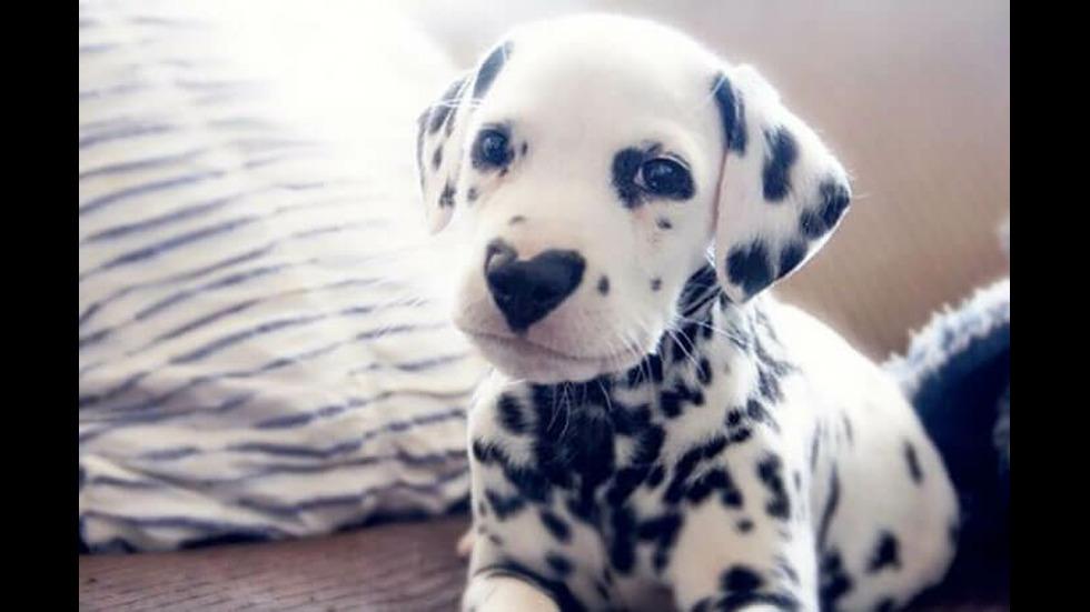 Уайли – кучето със сърце на носа, в което ще се влюбите