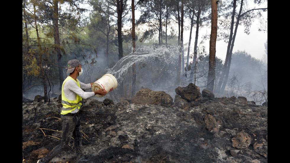 Огромни пожари бушуват в Ливан и Сирия