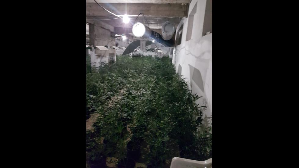 Разбиха наркооранжерия в София