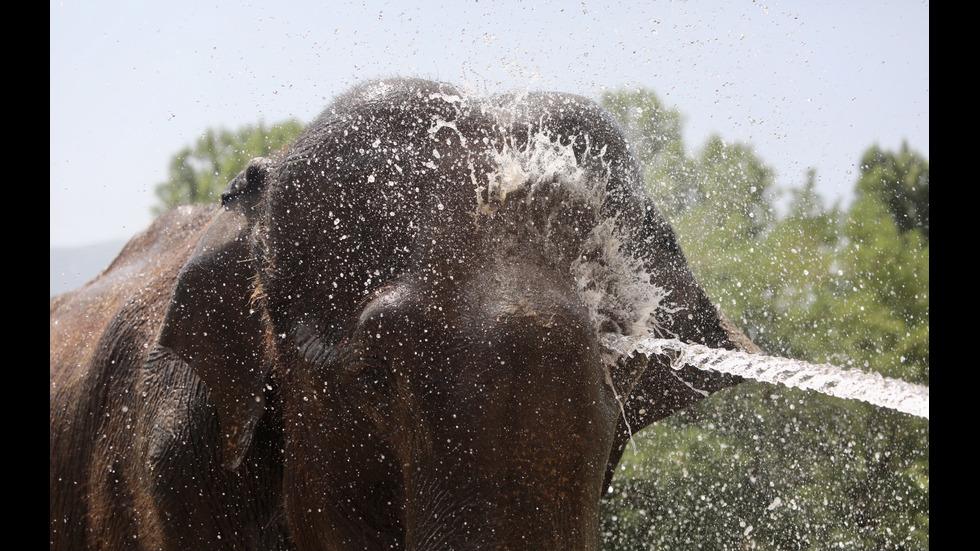 Как се разхлаждат животните в Софийския зоопарк