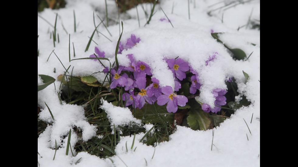 Студен фронт връща за кратко зимата