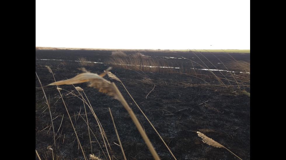 Пожар горя в защитената местност Орловото блато
