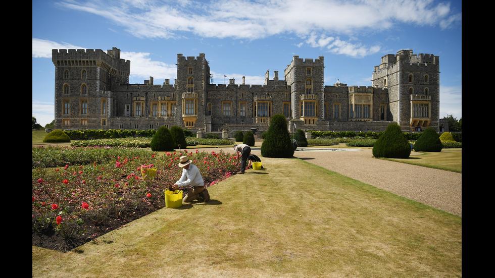 СЛЕД 40 ГОДИНИ: Една от градините в двореца Уиндзор приема посетители