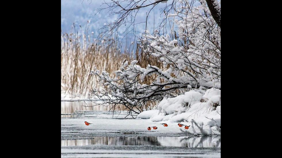 Финландска гора като от приказките