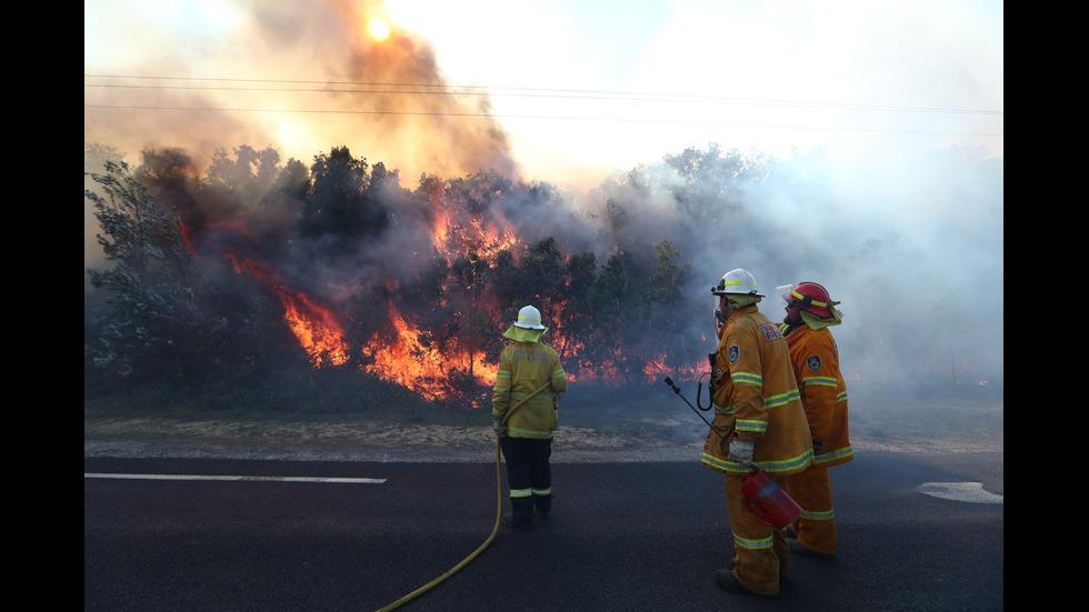 Пламнаха хиляди декари гори в Австралия