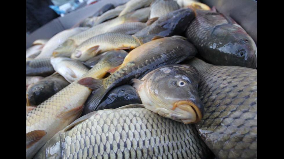 Проверяват търговците на риба преди Никулден