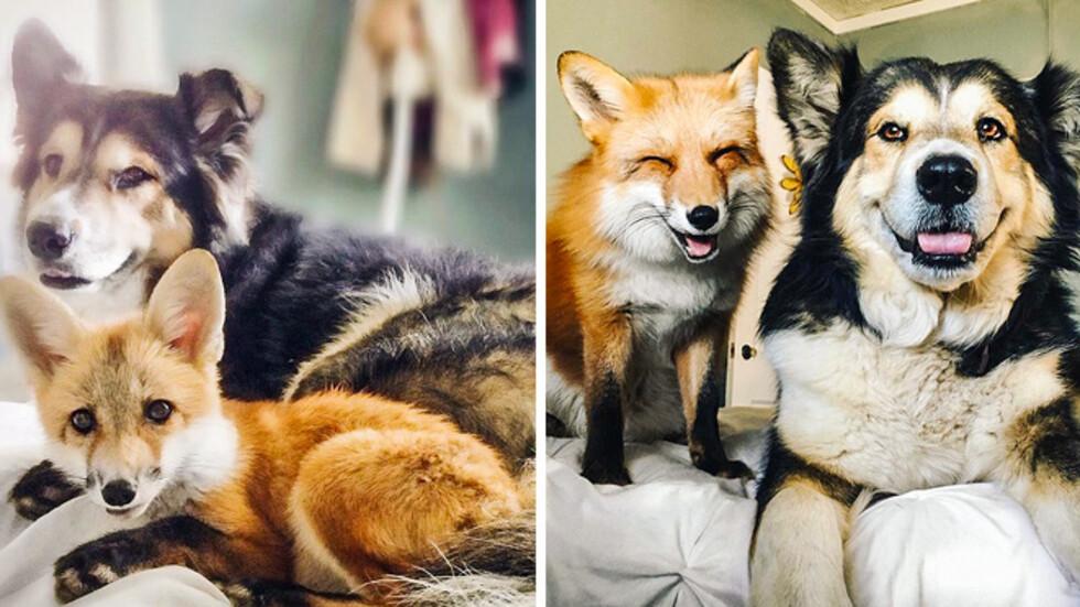 Снимки на животни, които са израстнали заедно