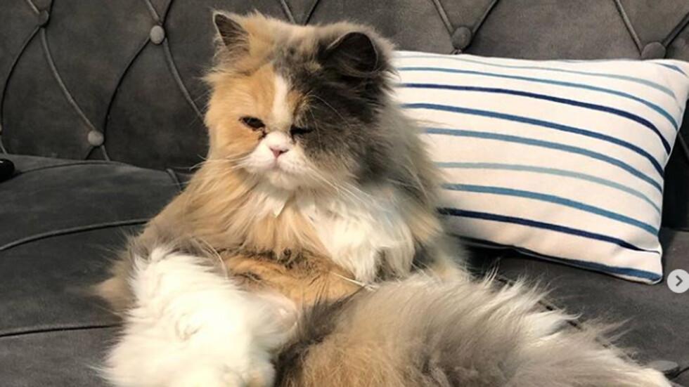 Котките – най-мързеливите същества